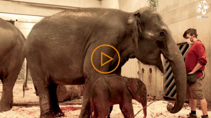 Zoo Praha: První dojmy ze sloní slečny